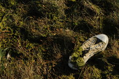 Disgarded running shoe. Photograph of a discarded running shoe washed up on a river bank Royalty Free Stock Photos