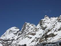 Disgelo alpino Picchi rossi sulla primavera Fotografia Stock