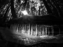 Disgelo della molla dei ghiaccioli Immagini Stock Libere da Diritti