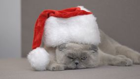Disgruntled cat in Santa hat trying to escape on couch, Christmas discounts