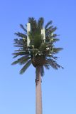 USA, Arizona: Disguised Cell Phone Pole Royalty Free Stock Photo
