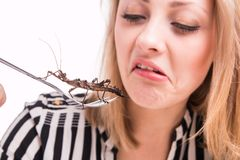 Disgusted woman eating insects with a fork in a restaurant Royalty Free Stock Image
