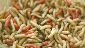 White and Red Worms Crawling. Disgustful background of  worms moving and crawling one over another stock footage