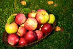 Dish with apples Stock Photos