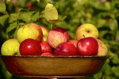 Dish with apples Royalty Free Stock Photography