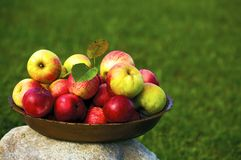 Dish with apples Royalty Free Stock Photos