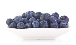Dish of Blueberrys Stock Photography