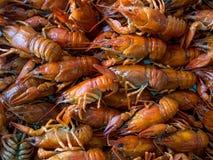 A dish of boiled crawfish Royalty Free Stock Photo