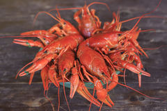 Dish with boiled crawfish Royalty Free Stock Image