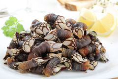 Dish of boiled goose barnacle - traditional food f Stock Photo
