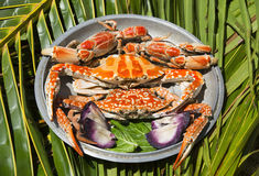 Dish with cooked crabs Stock Images