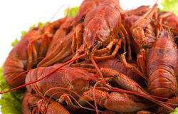 Dish of crayfish. With salad leaves Stock Photo