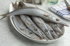 Dish with fresh barracuda fishes Royalty Free Stock Photo