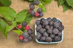Dish of Fresh Black Raspberries Stock Image