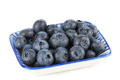 Dish of Fresh Blueberries Stock Photography