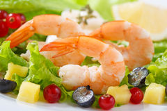 Dish of fresh cooked shrimps with salad Stock Photography