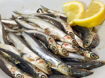 Dish with fresh little sardines just fished and lemon Royalty Free Stock Photos