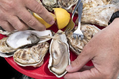 Dish of fresh oysters. Fresh oysters eaten with the hands on plastic plates, forks and lemon Royalty Free Stock Photography