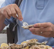 Dish of fresh oysters. Fresh oysters eaten with the hands on plastic plates, forks and lemon Stock Photo