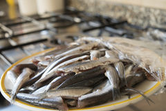 Dish of fresh raw anchovies. Fresh catch anchovies in a white dish on a hub Royalty Free Stock Photography