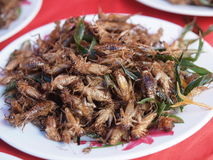 Dish of fried insects Royalty Free Stock Photo