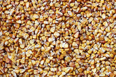 Dish full of dried yellow corn seeds Stock Image