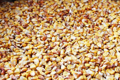 Dish full of dried yellow corn seeds Stock Images
