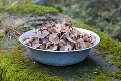 Dish of funnel chanterelles Royalty Free Stock Image