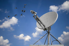 Dish And Geese Stock Photos