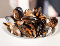 Dish of gourmet mussels garnished with fresh herbs Stock Photography