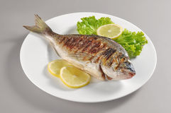 Dish with grilled fish gilthead bream Royalty Free Stock Photos