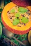 Dish halloween pumpkin soup served hollow fruit vintage Royalty Free Stock Photos