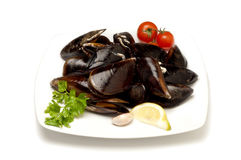 Dish with Mussel Stock Images