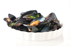 Dish of mussel Stock Photography