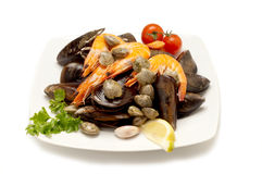 Dish with Mussel and shrimp Stock Images