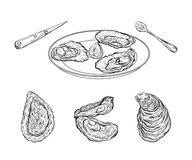 Dish with oysters and cutlery. Engraved style. Isolated on white background. Vector illustration Royalty Free Stock Images