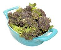 Dish Of Purple Headed Broccoli. Fresh raw purple headed broccoli in a blue dish isolated on a white background Royalty Free Stock Photos