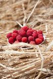 Dish of a raspberry. Against cereals Stock Images