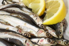 Dish with raw sardines just fished and lemon Royalty Free Stock Image
