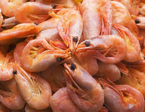 Dish with red boiled shrimps Royalty Free Stock Photography