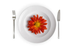 Dish with red flower isolated. White dish with red flower isolated on whithe background Stock Images