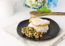Dish of rice - egg and stir fried chiicken with basil Stock Photos
