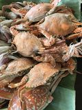Steamed Crab. A dish of steamed crab royalty free stock image