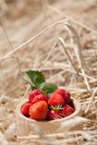 Dish of a strawberry. Against cereals Stock Photography
