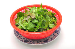 Dish of Vietnamese herbs Royalty Free Stock Photo