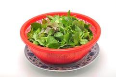 Dish of Vietnamese herbs Stock Image