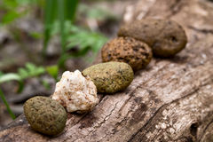 Disharmony in pebbles row Royalty Free Stock Photography