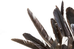 Dishevelled Birds' Feathers in Various Shades of Grey Stock Photography