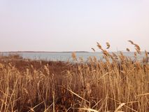 Dishui湖上海秋天 库存照片