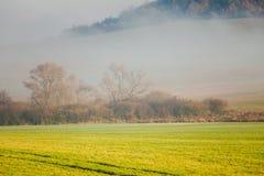 Disig landskapdimma över det gröna fältet Slovakien Arkivbilder